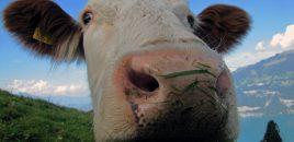 Die Milchmädchenrechnung